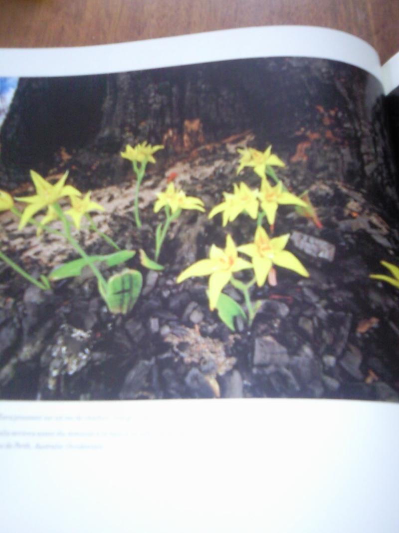 """Livre sur les orchidées """"Beautés Fatales"""" Photo011"""