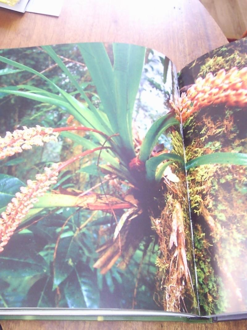 """Livre sur les orchidées """"Beautés Fatales"""" Photo012"""