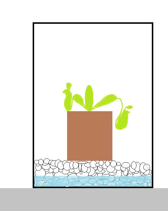 Gravier d'aquarium pour nepenthes Instal10
