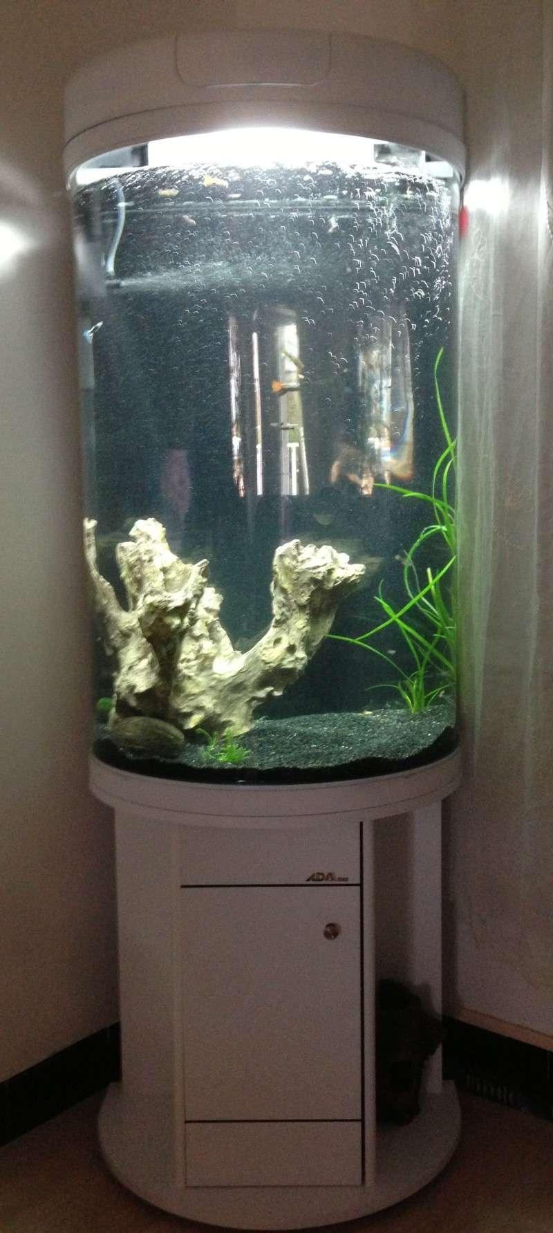 Mon aquarium colonne 15_05_10