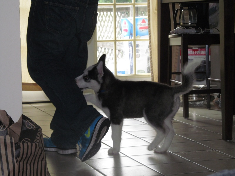 Puppy Feeding 61811