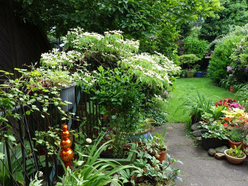 Gärten im Bilde - Seite 9 Dsc08811