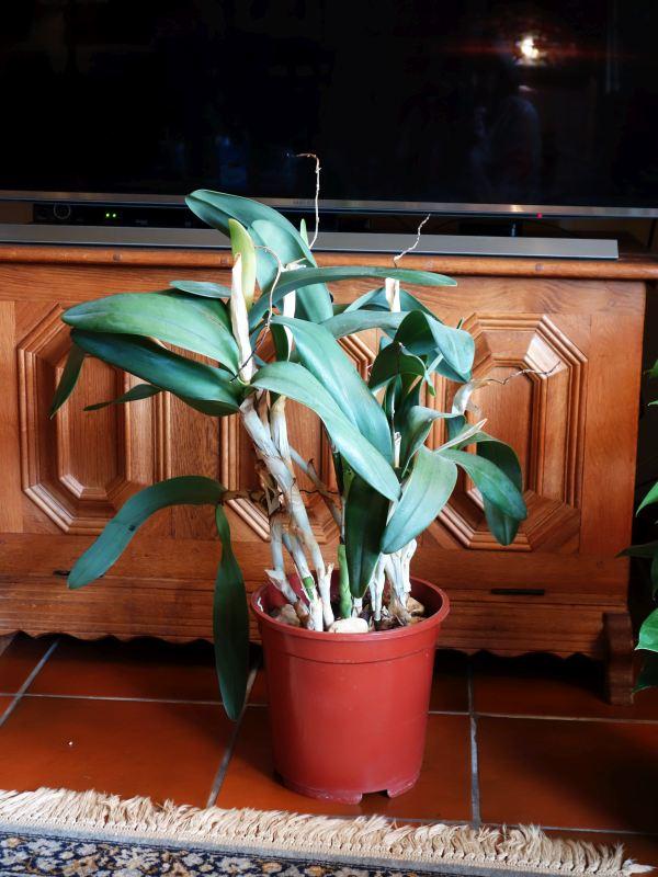 Orchideen-Neuzugang 2 - Seite 3 Dsc09013