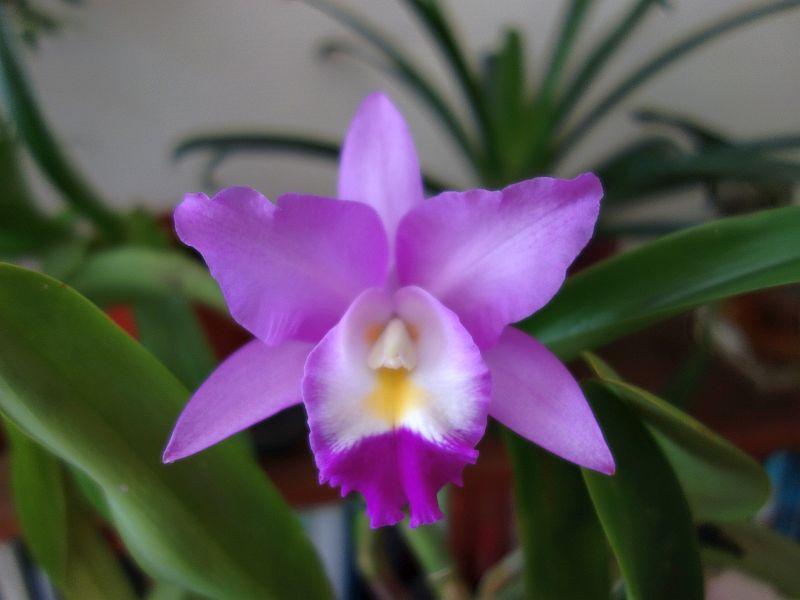 Orchideen 3 (fortlaufende Seiten 300 bis 400) - Seite 31 Dsc09532