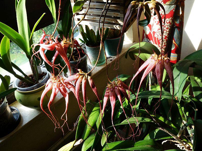 Orchideen 3 (fortlaufende Seiten 300 bis 400) - Seite 31 Dsc09612