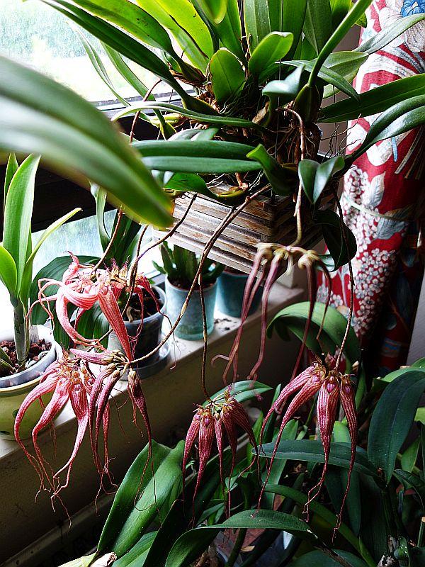 Orchideen 3 (fortlaufende Seiten 300 bis 400) - Seite 31 Dsc09613