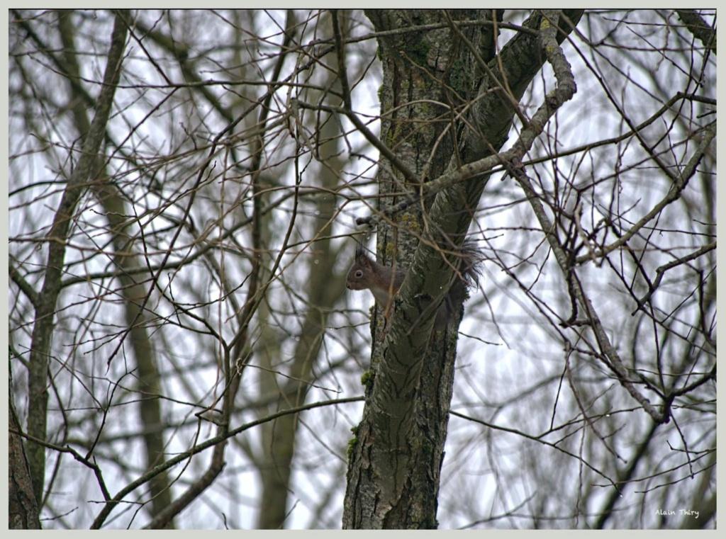 Écureuil, mésanges petites séries de ce matin  01089d10