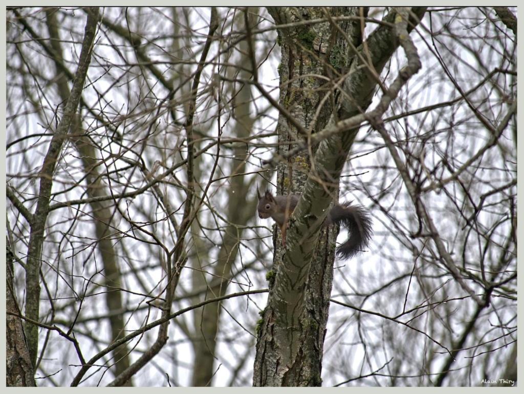 Écureuil, mésanges petites séries de ce matin  0fb07b10