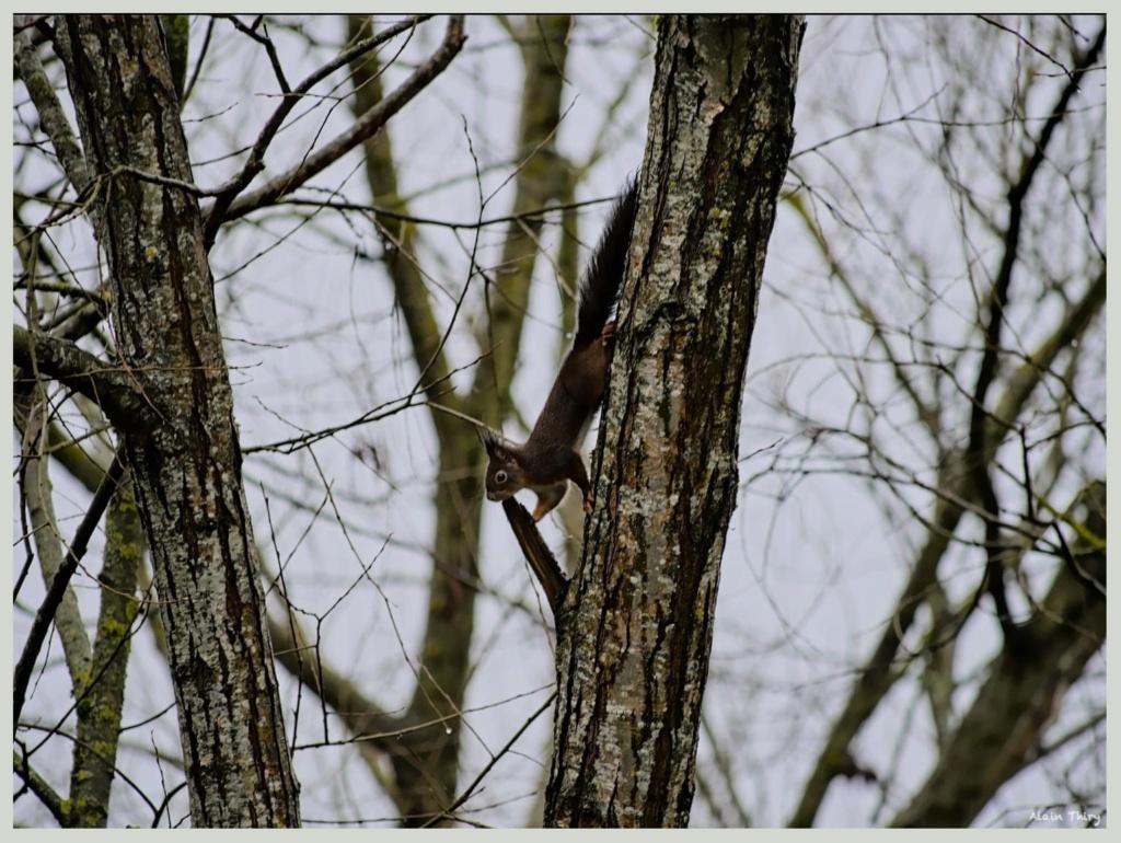 Écureuil, mésanges petites séries de ce matin  42aa8310