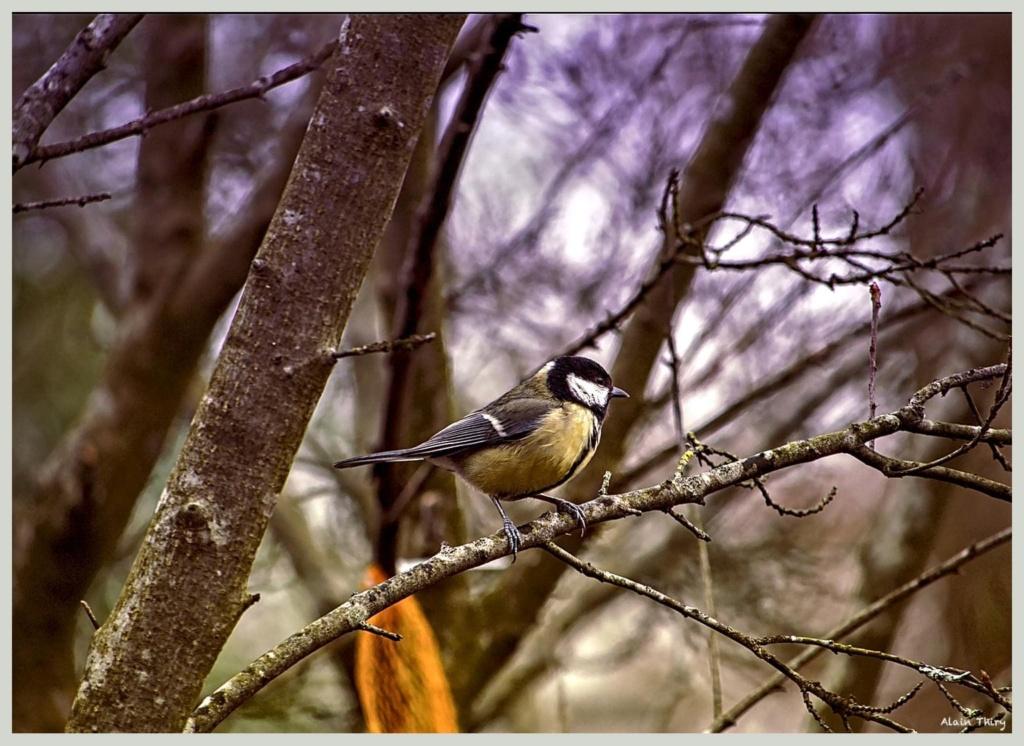Écureuil, mésanges petites séries de ce matin  794bed10