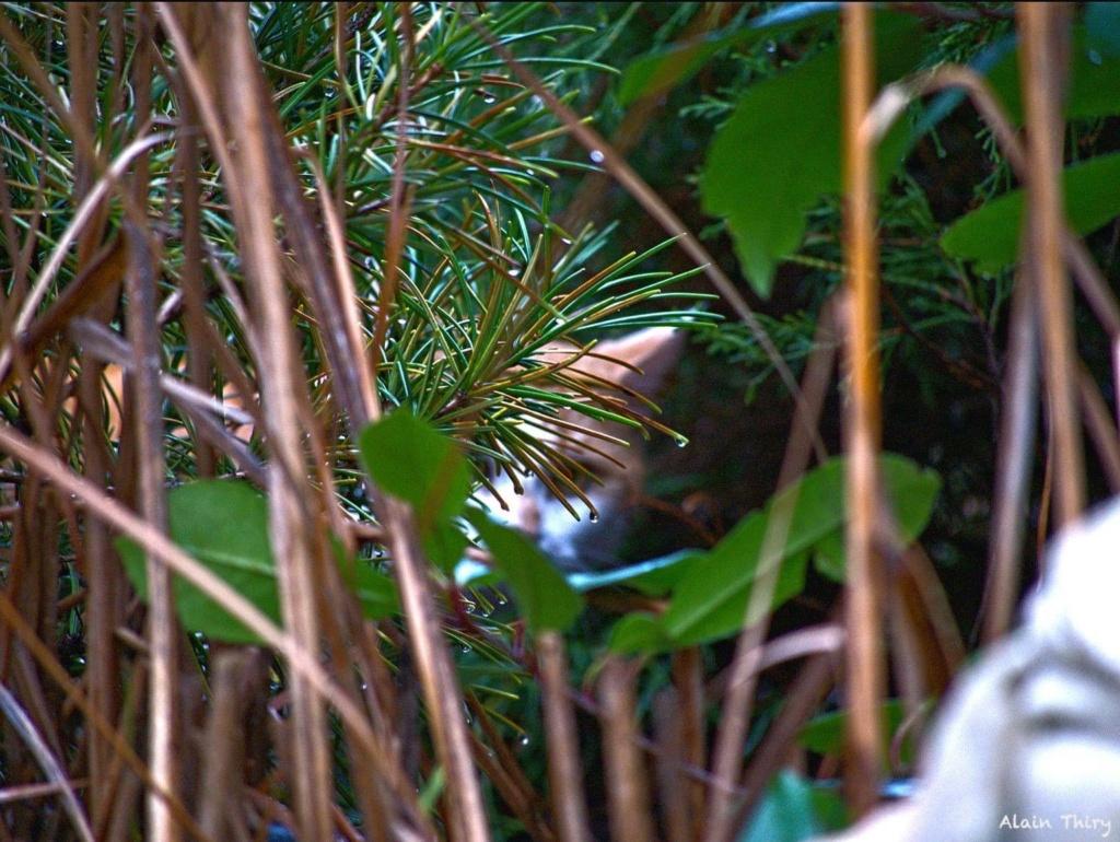 Écureuil, mésanges petites séries de ce matin  C2ff5810