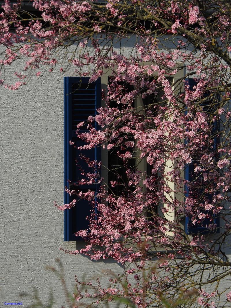 Photos du jour 23/03/2020 P3190414