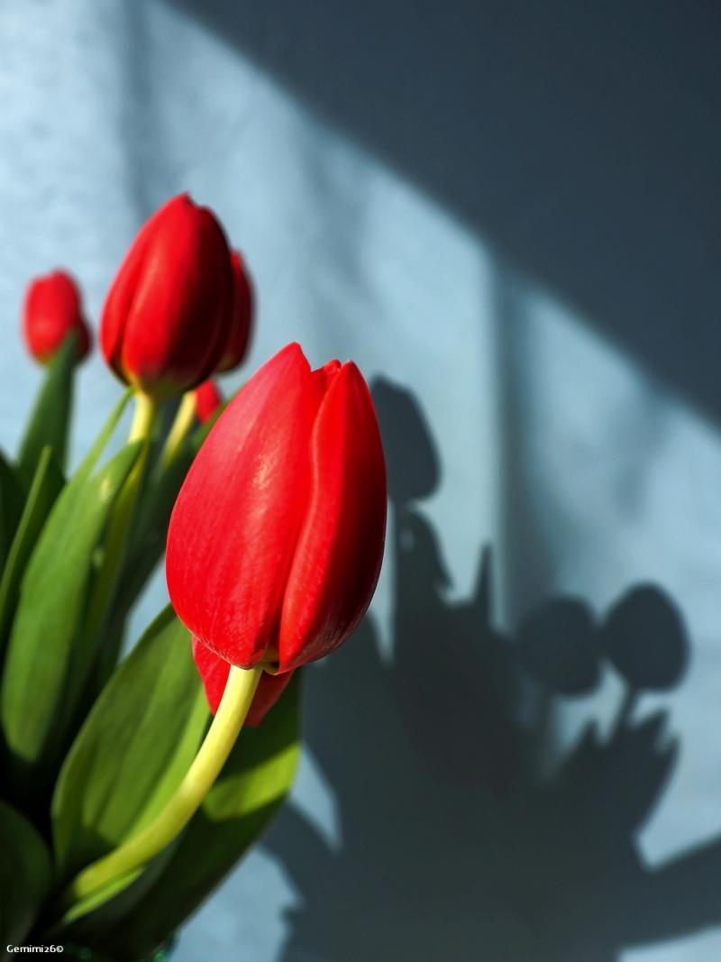 Y a le printemps qui chante P3300410