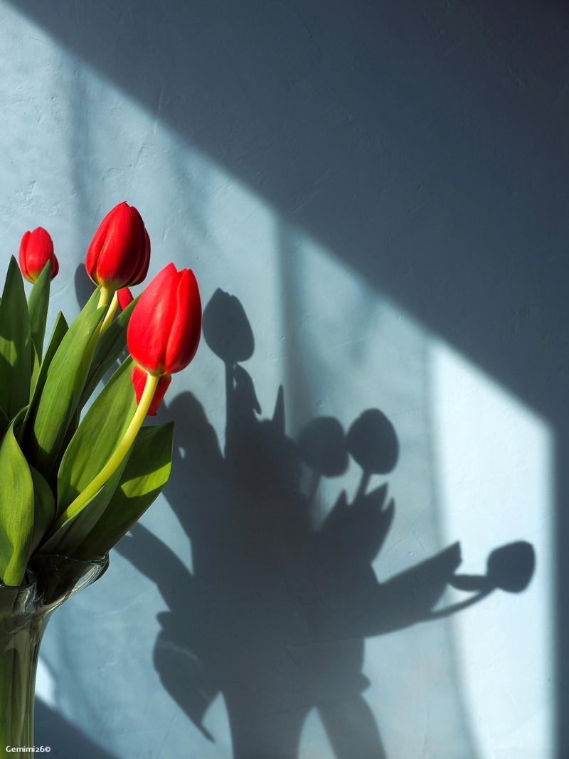 Y a le printemps qui chante P3300411