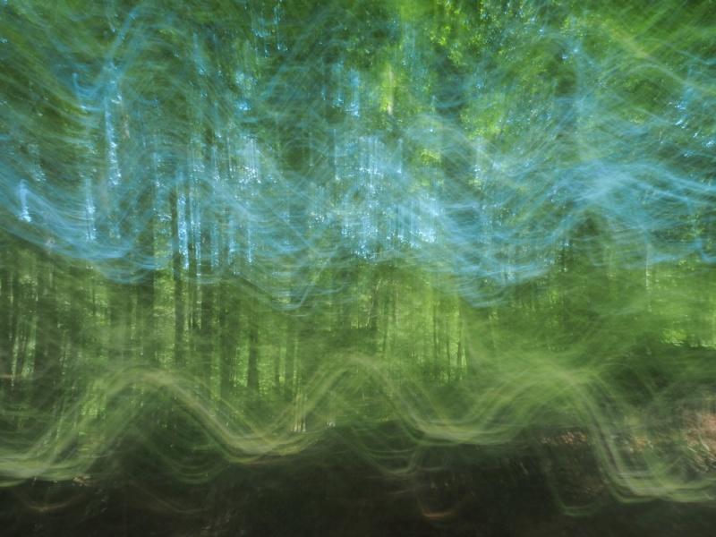Promenons-nous dans les bois.... P7070711