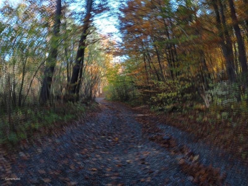 Promenons-nous dans les bois.... Pa260710
