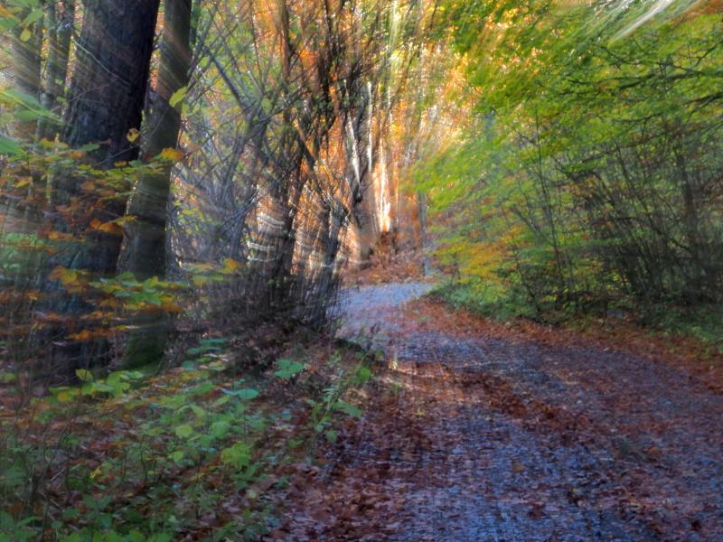 Promenons-nous dans les bois.... Pa260711