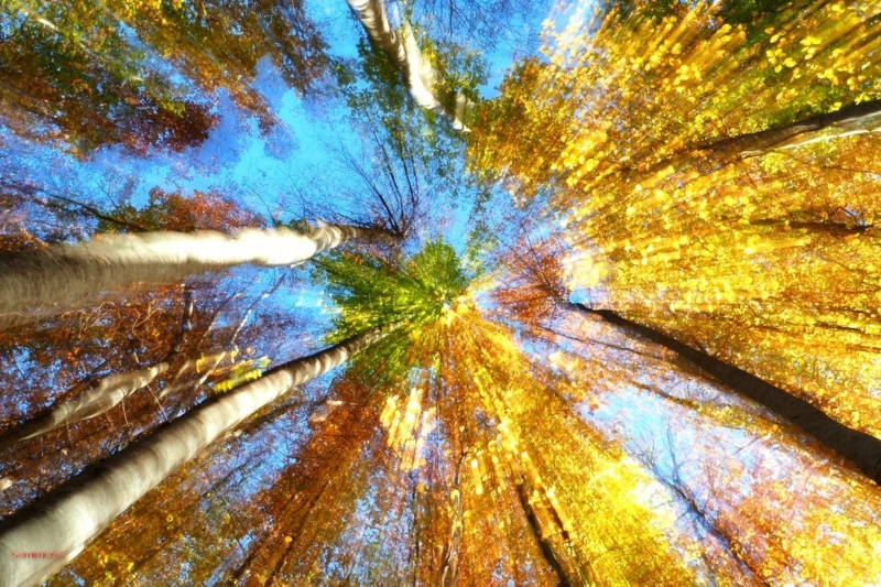 Promenons-nous dans les bois.... Pa291010