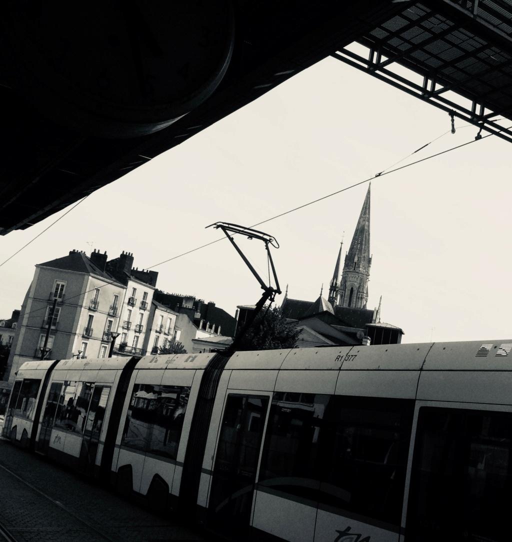 BALADE - De Nantes à Montaigu, la digue, la digue... 2713