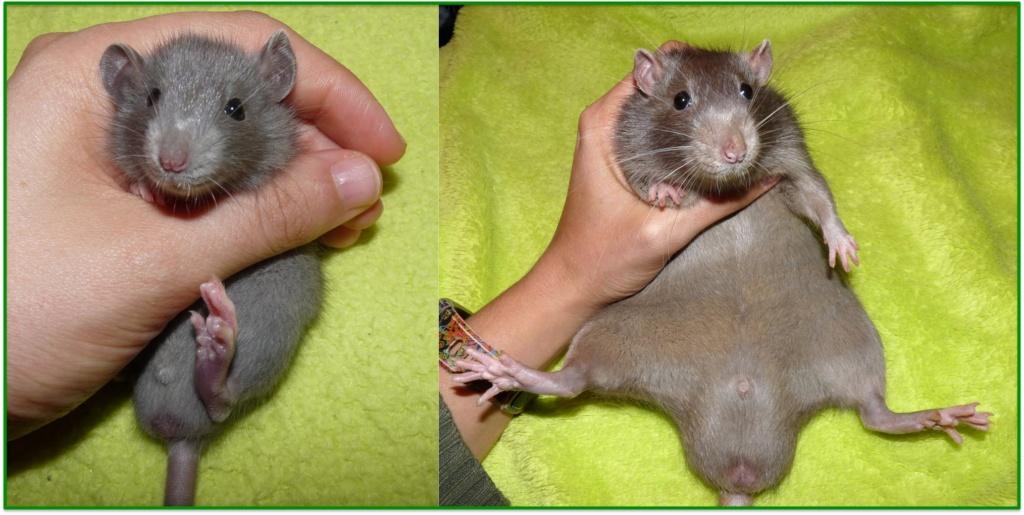 Raton trop petit ?  97f26710