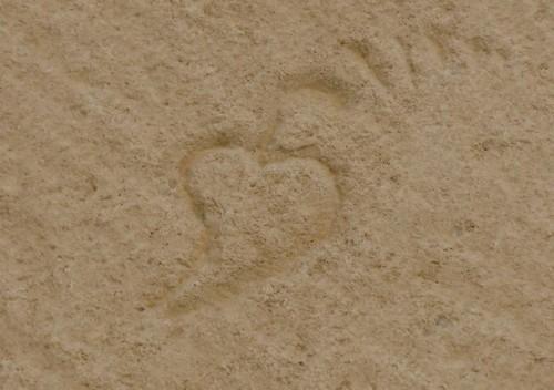 Au Coeur du sujet BSI : 1° SYMBOLIQUE DU  LIERRE Img_2310