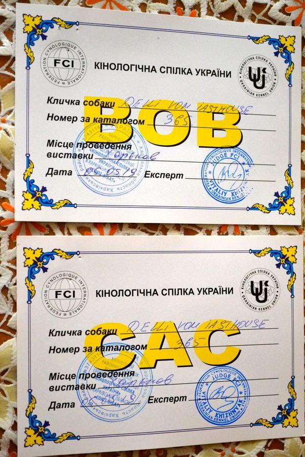 "04-05 мая 2019 ""Харьковская Весна-2019"" CAC-CACIB Dsc_0116"