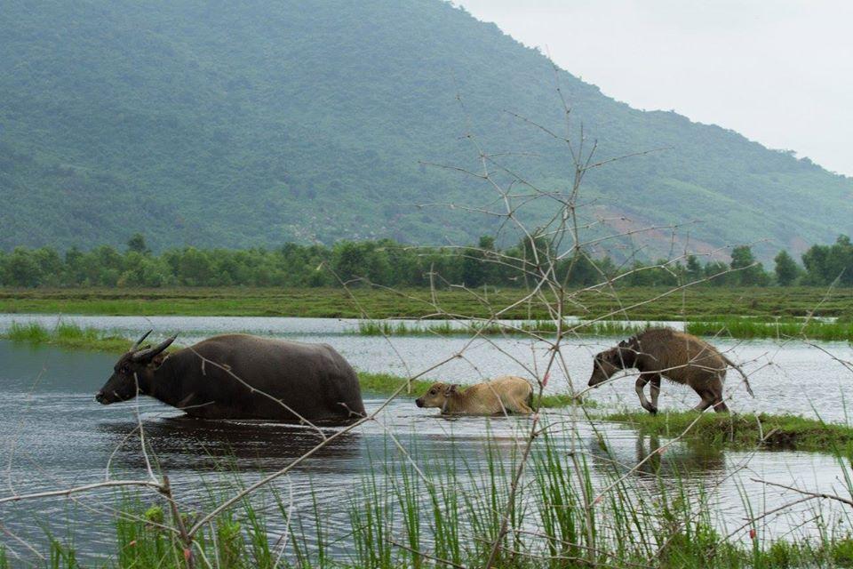 :Viet Nam qua những tấm hình.  62997d10