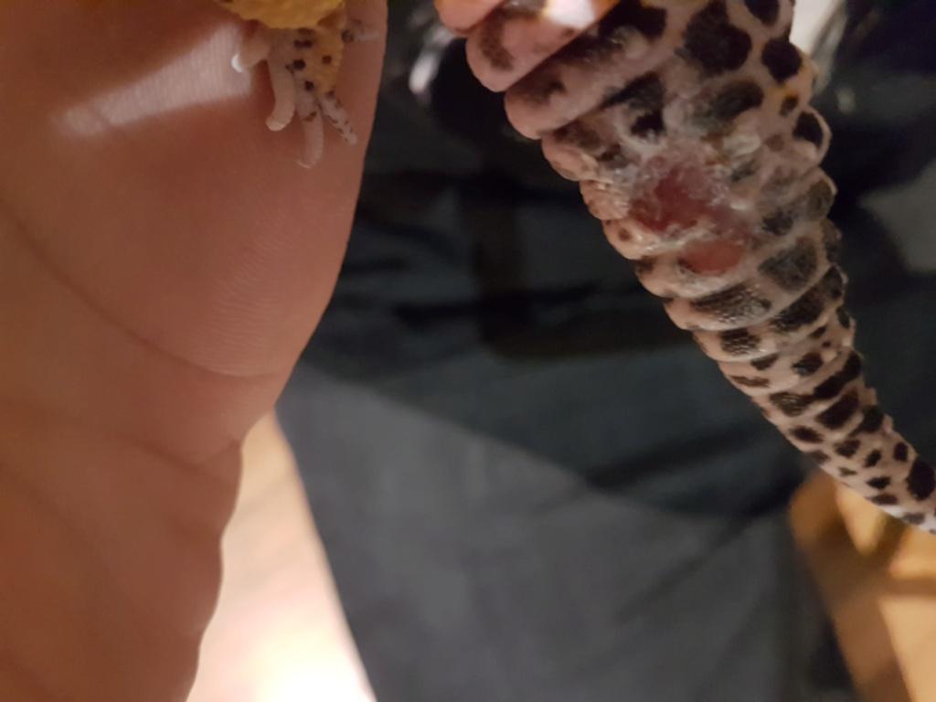 Problème gecko léopard 20191110