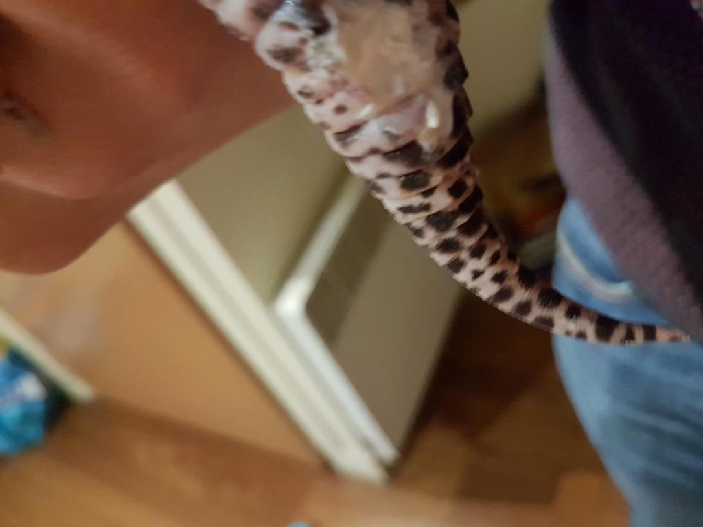 Problème gecko léopard 20191112