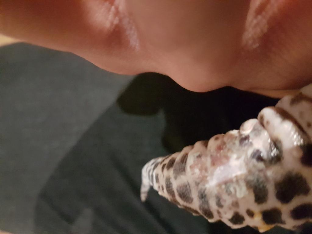 Problème gecko léopard 20191115