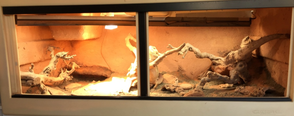 L'argile, un matériau parfait pour la création d'un décor de terrarium. - Page 6 Img_0510
