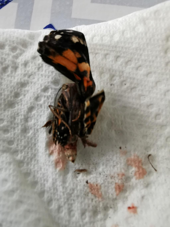 Naissance d'un papillon et ... Papill10