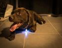 Site accessoires chiens sympa _dsc1810