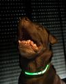 Site accessoires chiens sympa _dsc1811