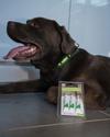Site accessoires chiens sympa _dsc1812