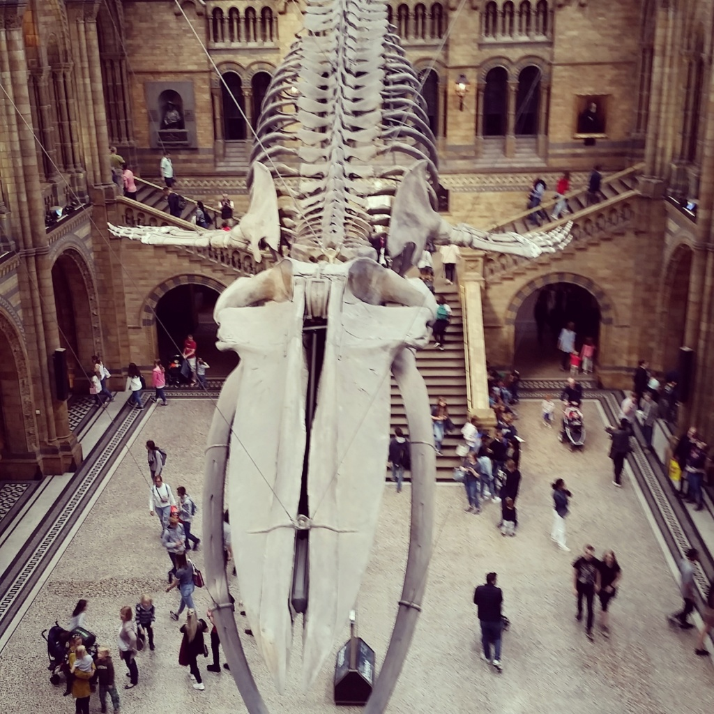 Le Musée d'Histoire Naturelle de Londres Img_2013