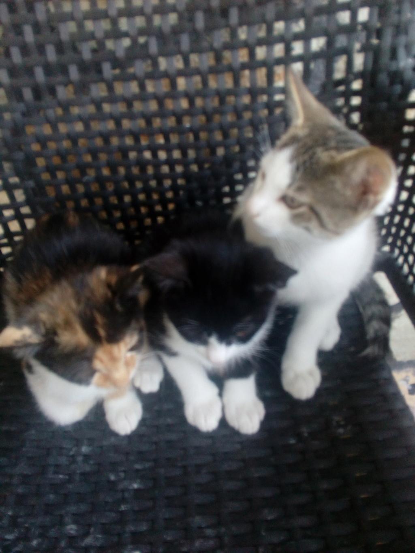 Χαριζονται 3 γατακια Img_2011