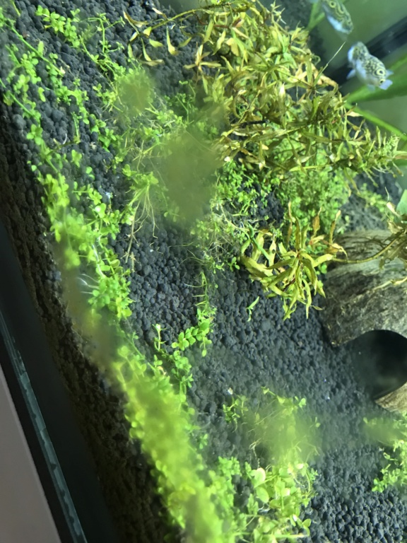 Problème algues brunes Bb959510