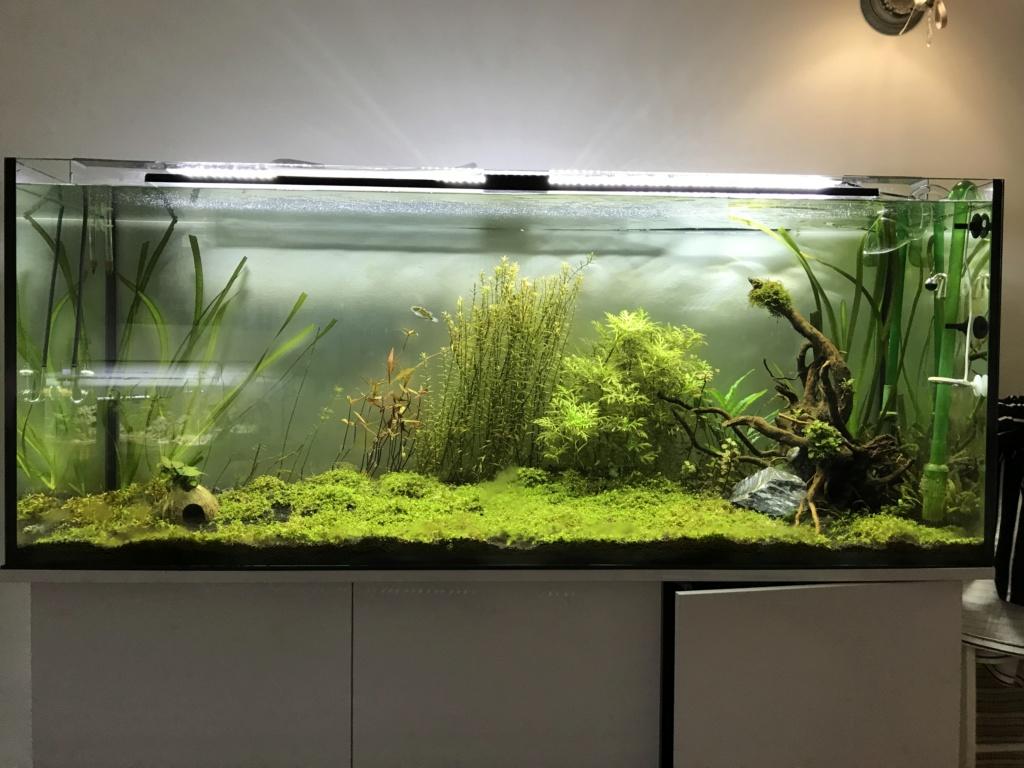 Problème algues brunes Cc60a410