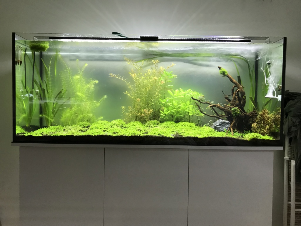 Problème algues brunes Fb023b10