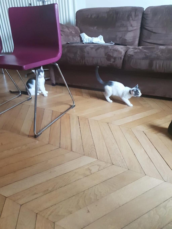 SACHA (Asuka) et BÉMOL (Eiko)  5bd2ca10