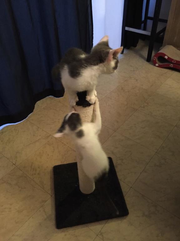SACHA (Asuka) et BÉMOL (Eiko)  Img_5113