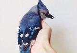Être surprise à chanter sur les toits Oiseau11