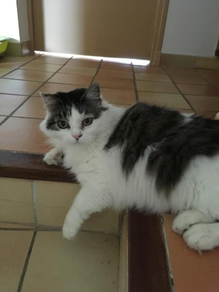 SCIENTIFIQUEMENT PROUVÉ : Les chats nous soignent ! - Page 6 1000c910