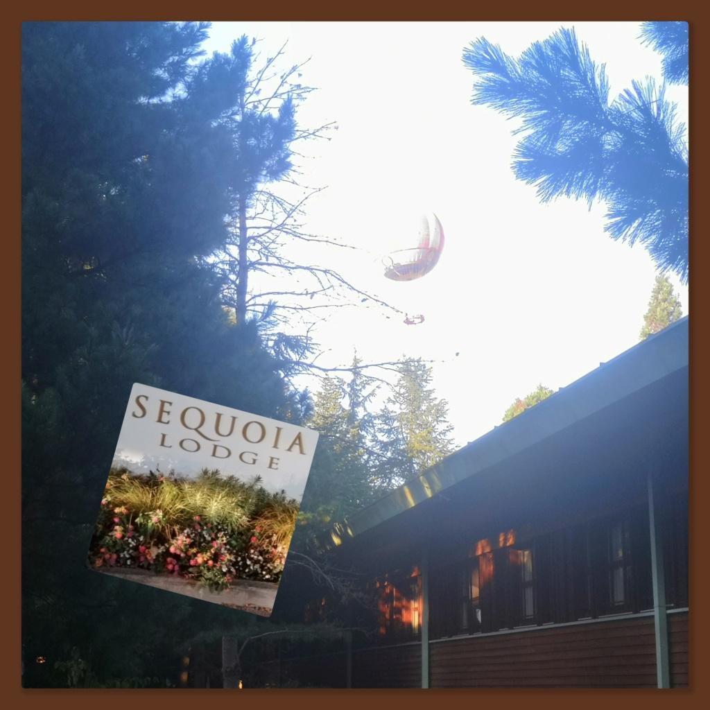 [TR terminé] Fêtons nos 20 ans d'amour au Séquoia Lodge (en GFC et pack signature Roi Lion)... septembre 2019 Sequoi10