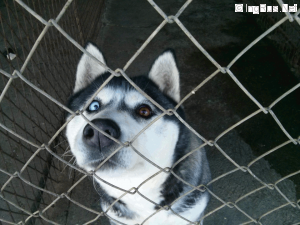 are puppies purebred? Med_5e12