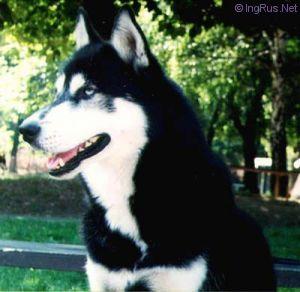 are puppies purebred? Med_5e13