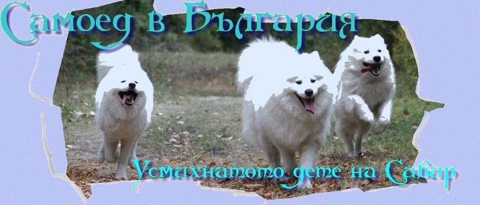 САМОЕД В БЪЛГАРИЯ - ФОРУМИ ЗА САМОЕД
