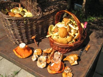 les champignons Champi11