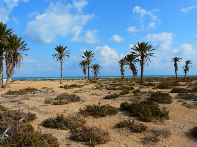 Ptit week end a Djerba ... P1060021